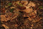 Find a Frog by Tindomiel-Heriroquen