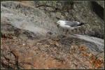 Seagull by Tindomiel-Heriroquen