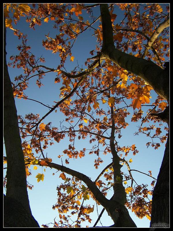 Golden tree by Tindomiel-Heriroquen