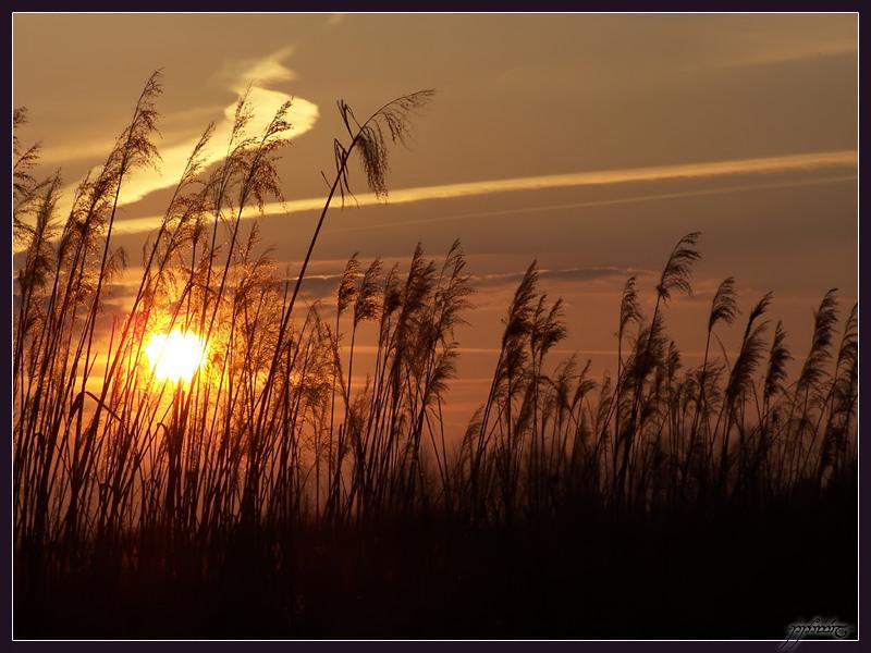 Sun In Grass by Tindomiel-Heriroquen