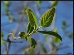 Green spring by Tindomiel-Heriroquen