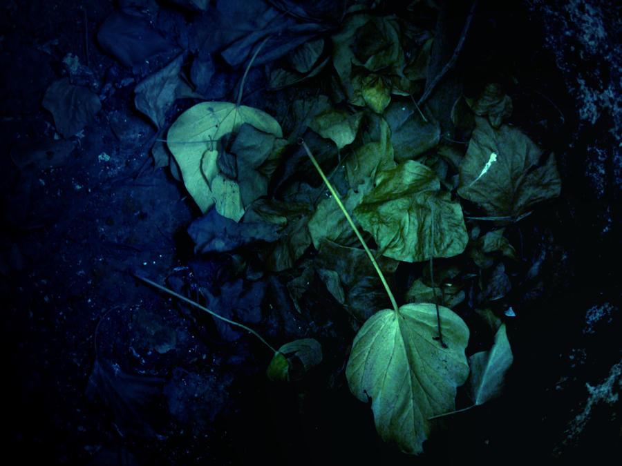 Fairy Slums by behindsilence