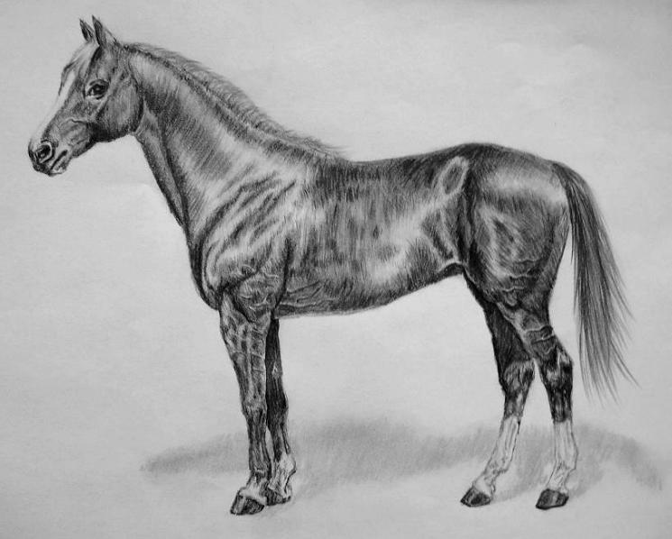 Horse pencil drawing by ichfindedich