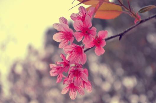 Spring Sense