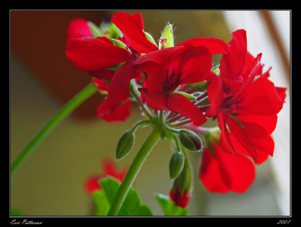 Vibrant Red by OSURico112