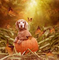 Pumpkin by samueltd