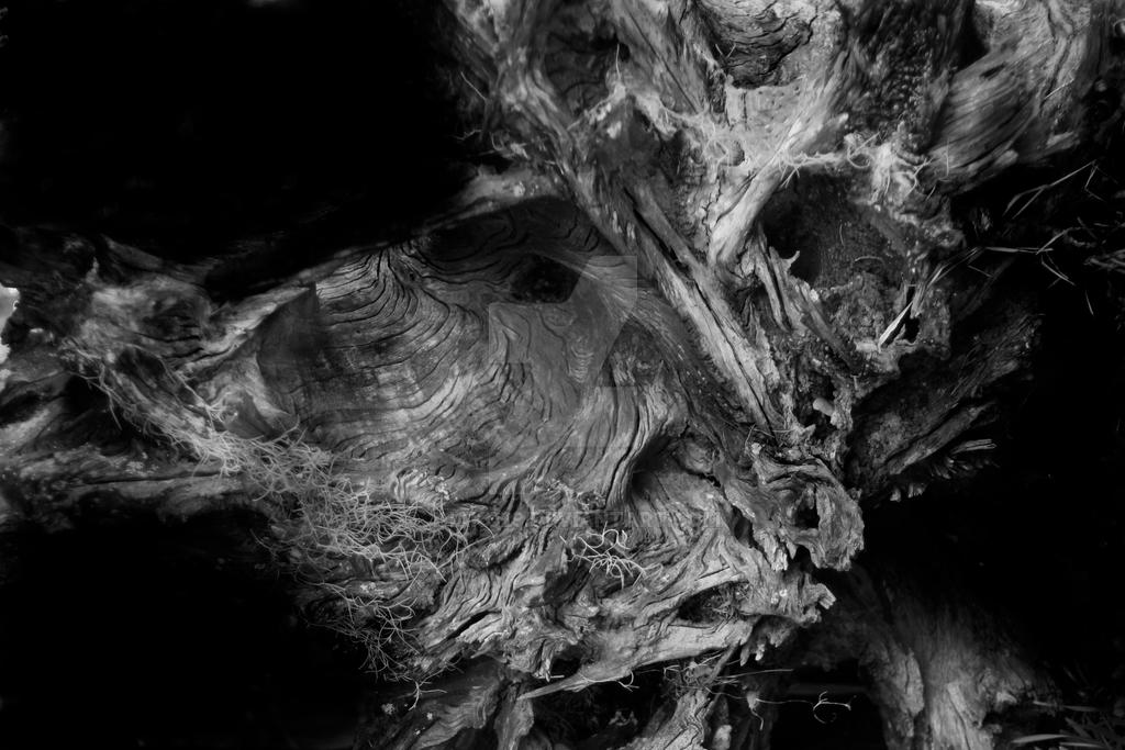 Alien scape-Petrified series#2 by jhako29