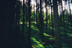 Woodland by Astralview