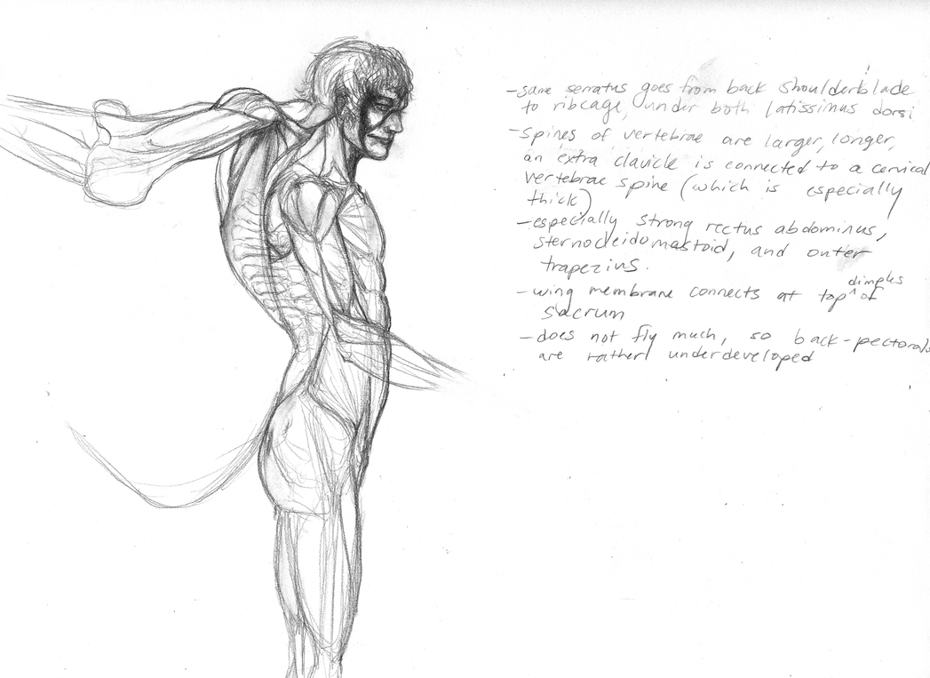 Riyadh -wing anatomy by Zanikal