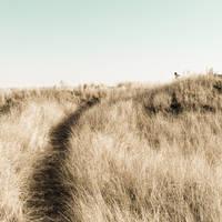 a continuation of dreams by equivoque