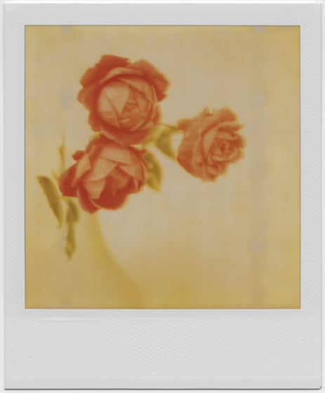 Old Fahioned Roses by equivoque