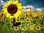 Sun Bee by TheFantaSim