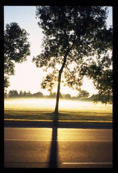 School: Foggy Sunrise