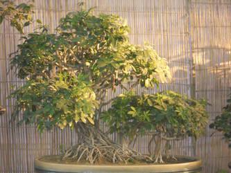 bonsai plants by yashmeet135
