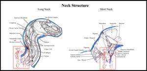 Dragon Neck Musculature