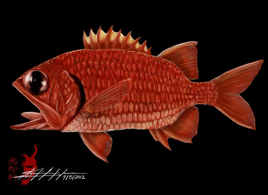 menpachi fish Gallery