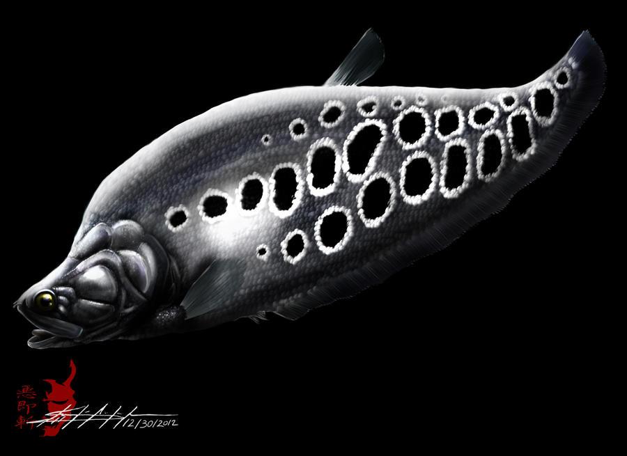 Clown Knifefish (Chitala Ornata) by Blacksky959 on DeviantArt