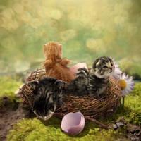 A Nest Full of KITTENS