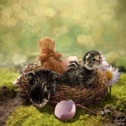 A Nest Full of KITTENS by Kittensoft