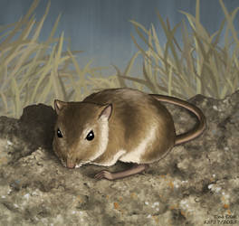 Rock Pocket Mouse by Kittensoft