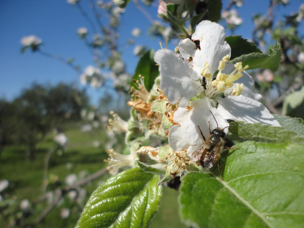 Maya l'abeille by bleue-diesel