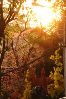 Saigon Blossom