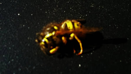 Wasp i by AmosAnon