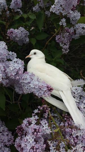 Flowery Dove by Karatefinch