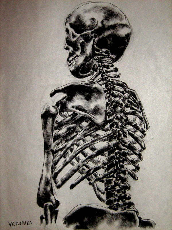 Skeleton Back View By Rehabilitative On Deviantart