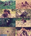 momentos en el prado