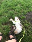 Josephine loves grass.