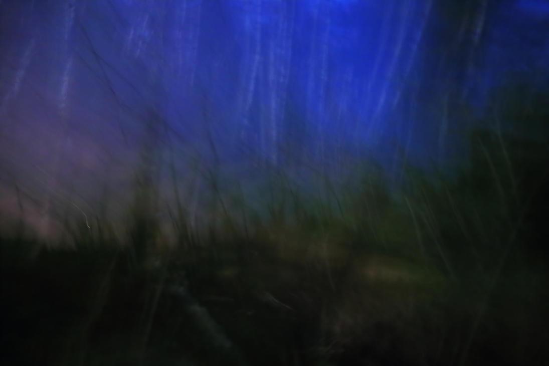 Forbidden forest No.1 by qaxtx