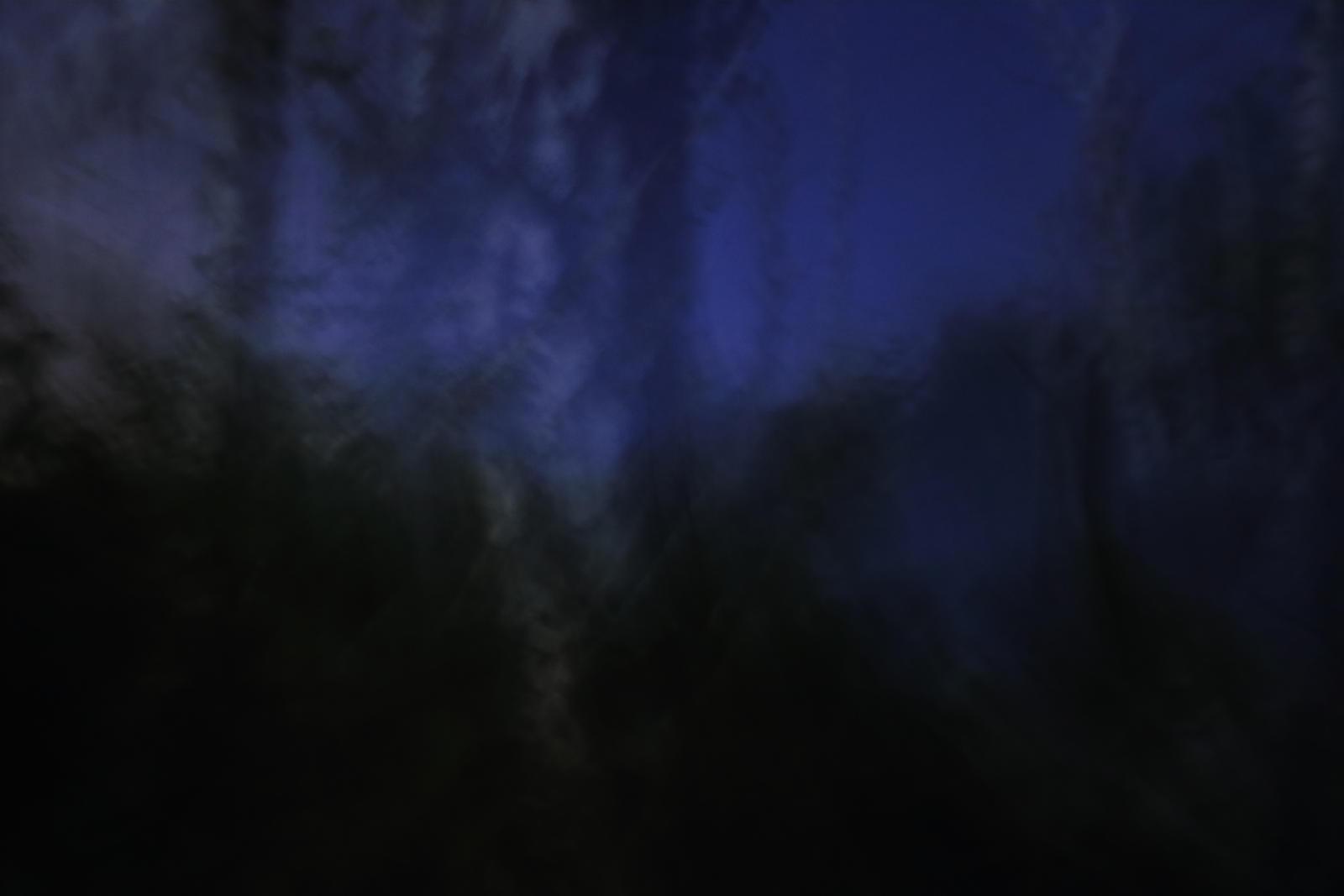 Forbidden forest No.8 by qaxtx