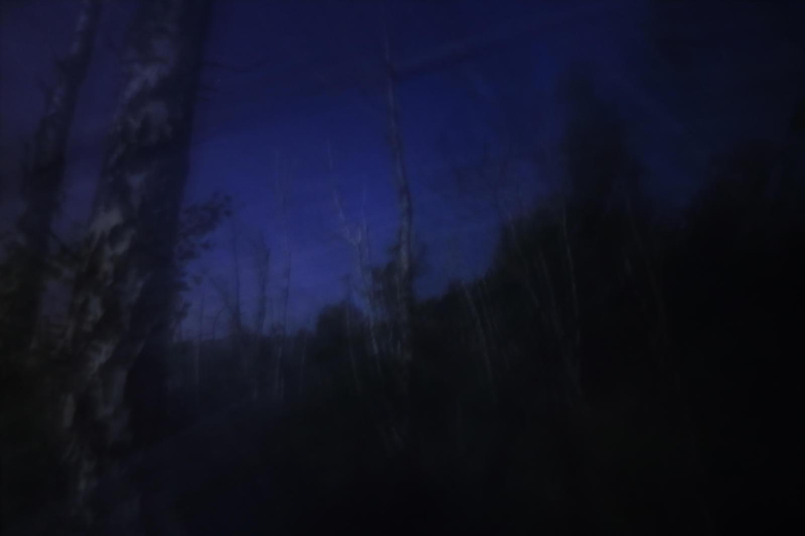 Forbidden forest No.11 by qaxtx
