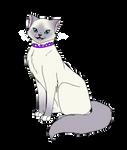 The Sassy Little Kitten
