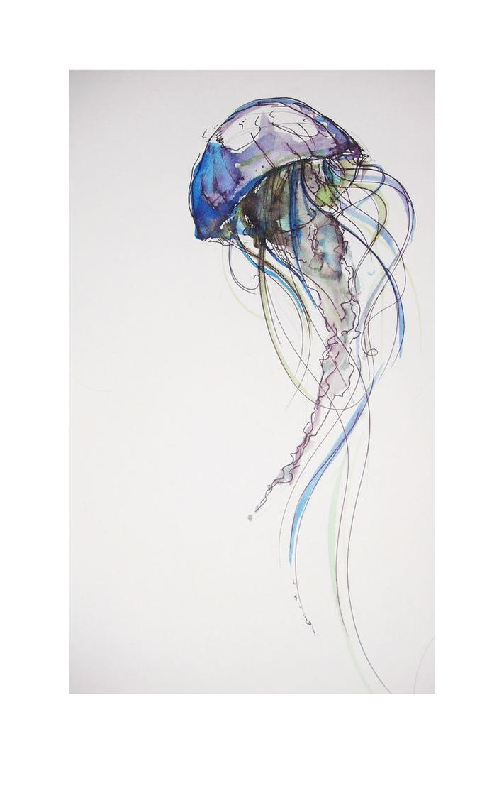 Line Drawing Jellyfish : Jellyfish by photographer amymay on deviantart