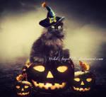 *halloween kitty*