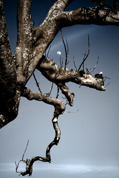 moon and dying tree by semangatmembara