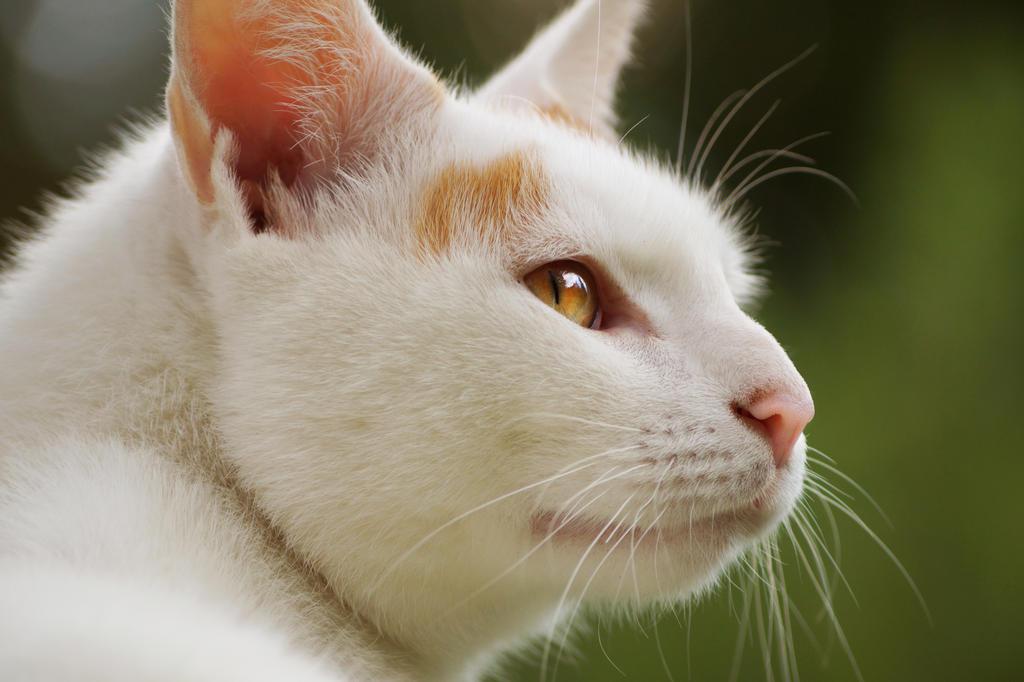 assassins cat Arno by Lalingla