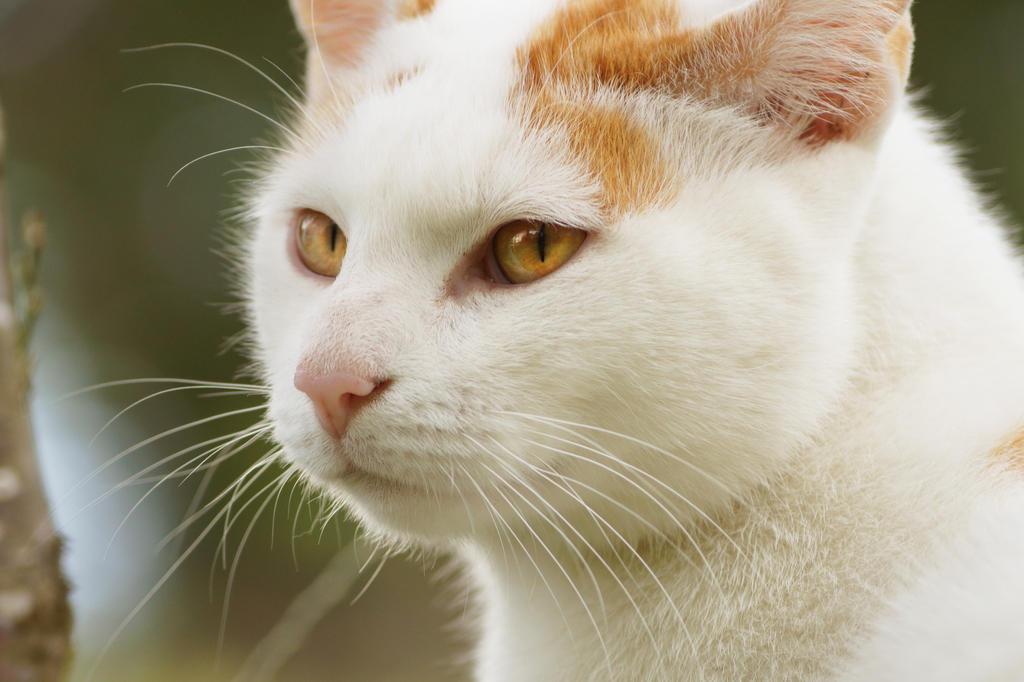 Arno Assassins Cat by Lalingla