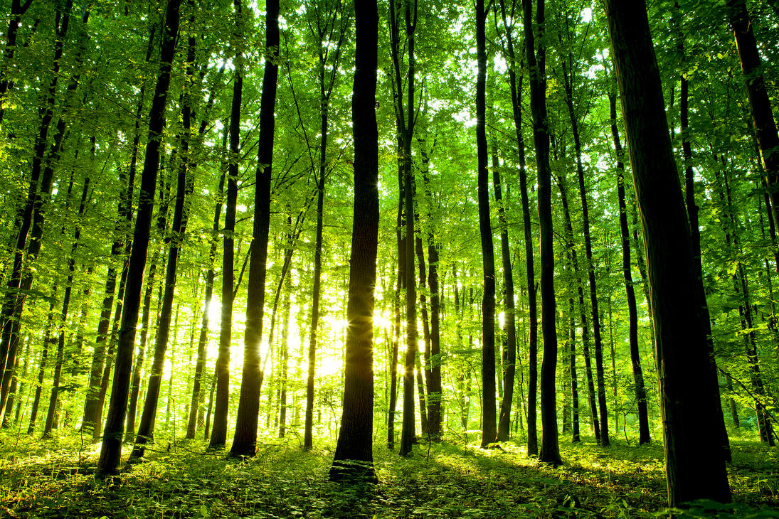 Image result for Beautiful forest