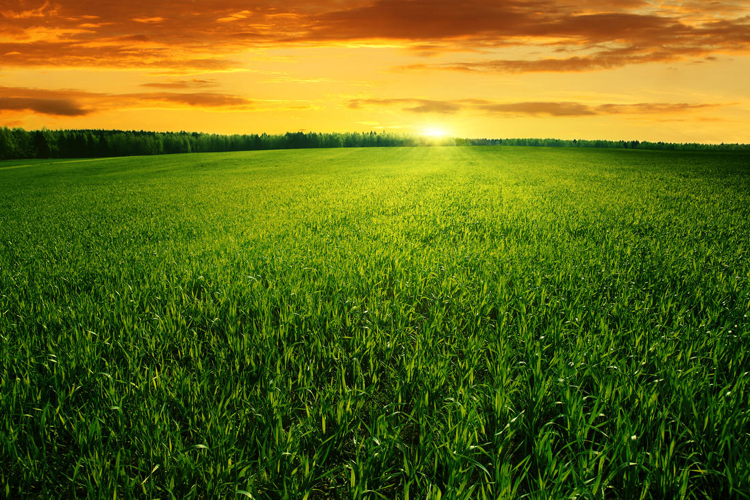 Field of green grass and bright sunset by macinivnw on DeviantArt