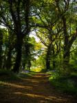 Walk The Bluebell Path