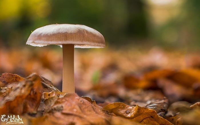 Woodland Mushroom by EmMelody