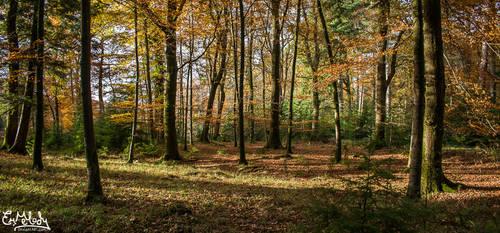 Autumn Woodland by EmMelody