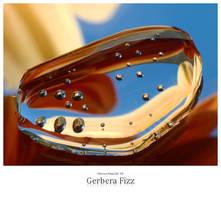 Gerbera Fizz by signmeupscotty