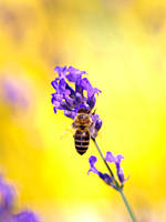 Busy Bee by signmeupscotty