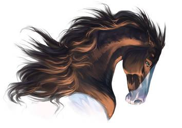 A horse by Diffary1