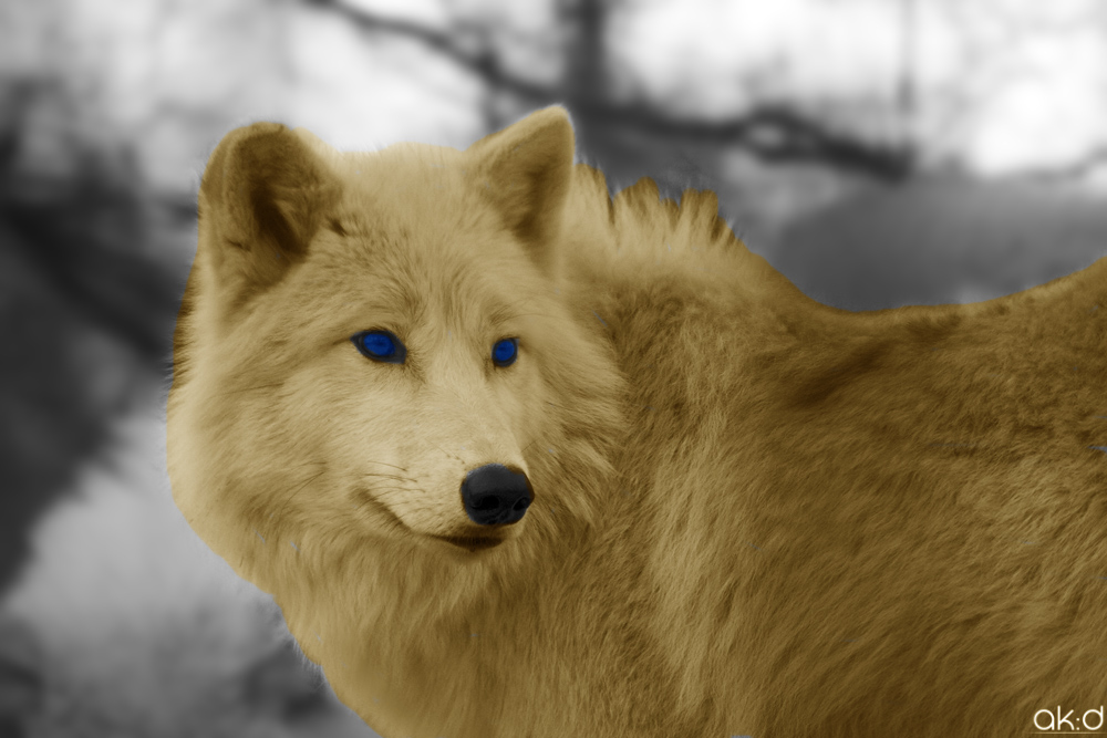 Light brown wolf with blue eyes - photo#17