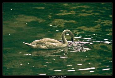 Swan by malvie